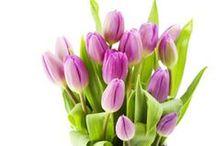 Spring Holidays & Activities