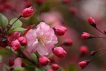 ♡Beautiful Flowers♡ / by ~Brooke~
