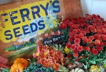 Vintage Seed Packets & Catalogs / by Mary Ann Stewart