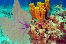 Reef Love
