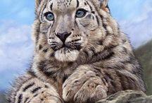 Snow Leopard my Paradise pet / Snow Leopard
