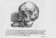 (•) Andreas Vesalius