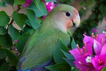 Beautiful Birds / by Sly Pinkspy