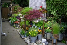 """MY GARDENS !! / I have a small """"front door"""" courtyard garden - that was a huge pile of garbage when I moved into the basement suite - in 2009.  Within 2-3 months, I had it looking like it had been a garden space for a few years, with everything growing in containers only -- same with my back patio.  I am one very, very passionate gardener !!"""