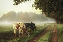 Country Living -- A Little Heaven on Earth / by Gail Freeman Ford