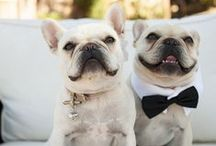 Pets At Your Wedding