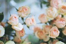floral / by Ashli Wood