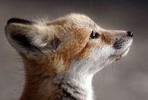 Fox and Vixen / by Gail Freeman Ford