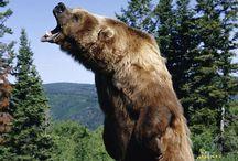 Bears / by Gail Freeman Ford