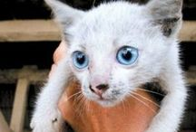 Media on Annex Cat Rescue / Annex Cat Rescue mentioned in articles in the Media
