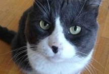 ACR's Adopted Cats! / Annex Cat Rescue's cats who have been adopted:  http://annexcatrescue.ca/adopt/happy-tails/