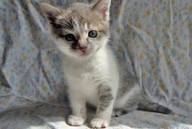 Photos & Videos from our Foster Homes