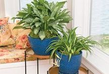 The Great Indoors / by Gardener's Supply Company