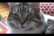 Volunteering with the Annex Cat Rescue