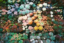 Gardens / by Laura Rocca