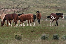 """Horses n' Ponies n' Donkeys / In memory of my """"Spotted Dove"""", she was an Appaloosa.  Miss her so..  Hello everyone, welcome to my board.  More are welcome to join, please invite your friends.   Happy pinning!"""