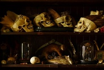 Cabinets of Curiosities  / Antes / by Maria David