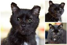 ACR's Blog / Stories from the Annex Cat Rescue Blog