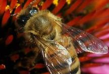 Bee Buzz / Bees and gardening go together naturally. How can you help keep bee populations thriving? / by Gardener's Supply Company