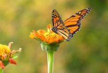 Butterflies / Make your garden more hospitable to butterflies by creating a waystation or installing shelters.
