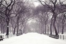 Winter Wonders / by Carolyn Tarver