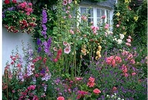 Garden / Gardening inspiration and tips to try to cure my black thumb. I especially love english gardens.