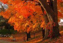 I Love Fall! / by Carolyn Tarver