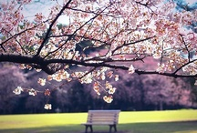 Spring! / by Carolyn Tarver