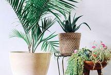 Flowers & plants <3