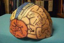 Science Nerd / Homeschool science ideas / by Dawn Elsberry
