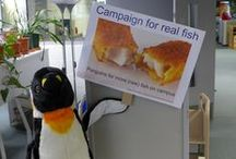 Pablo the UoP Penguin / Our library mascot and his adventures! Follow him on Twitter @uoppenguin