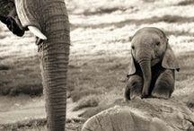 Cute Animals / by Ashley Newton