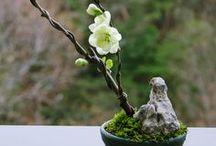 Bonsai, Ikebana, Koke-dama, Moss