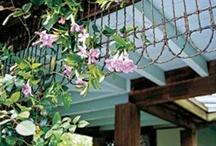 My Garden Shed Ideas / by D Marie Bass-Keller