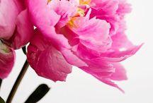 Floral / by Michaela Wik