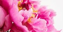 Flowers Flowers Everywhere / flowers, florals in nature, art, bouquets, botanicals