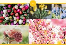 Theme : Spring / If you get married in the spring, why not make spring your weddingtheme! Celebrate your beautiful day with the abundance of flowers of the spring time. There are beautiful flowers in this time of year like the narcissus, tulips, hyacinth and fresia which could decorate your venue.