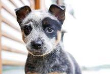 Pups / by Emily Rushton