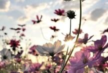 Gardens / by Anna Spilsbury