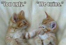Funny ☺ / Giggity giggity / by Ashlie Griffith