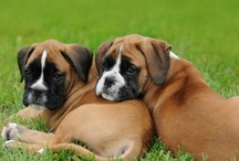 BOXERS -N- TREATS / by Tracey Musser