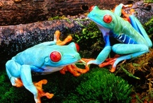 FROGS / by Tracey Musser