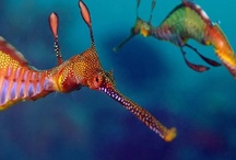 SEAHORSES / by Tracey Musser