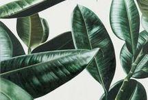Plant Love / Garden inspiration + tips for raising happy plants.