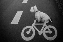 """~ Dog on the Move ~  Dogs going Places ~ / We smile when dogs are having fun - these days dogs really get around...and that usually means their ears are """" Blowin' in the Wind """"!    Brought to you by the dog lovers at www.aloveofdogs.com"""