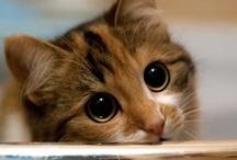 I Love Cats / by Lois Walton