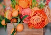 Orange / by Lois Walton