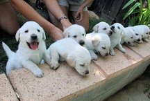 Puppies / by Lois Walton