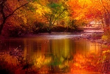 Leaves / by Lois Walton