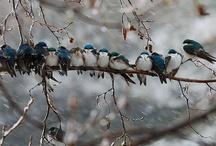 Birds / by Lois Walton